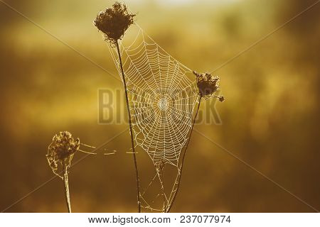 Autumn Abstract Background With Dry Plant At Sunrise With Web, Vintage Retro Image