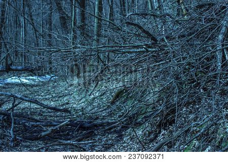 Mysterious Thin Branches In A Fantastic Nocturnal Forest No One Around The Exciting Atmosphere