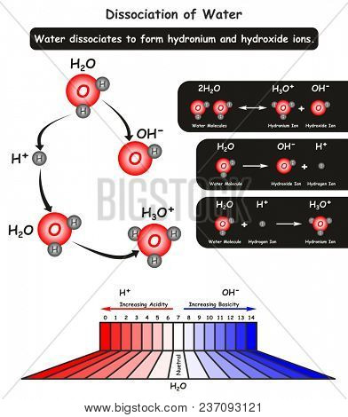 Dissociation of Water Molecule infographic diagram showing the chemical reaction where it dissociate into hydronium and hydroxide ions also acidity and basicity of ions for chemistry science education