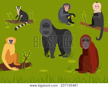 Monkey Character Animal Different Breads Wild Zoo Ape Chimpanzee Vector Illustration. Macaque Nature