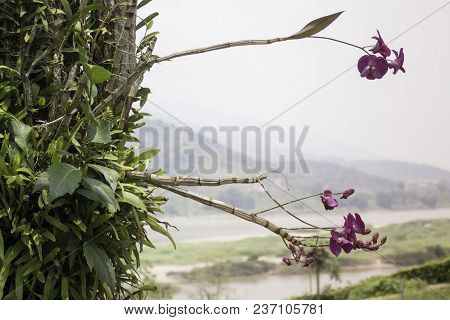Wild Orchid Flower Plant In Nature, Stock Photo