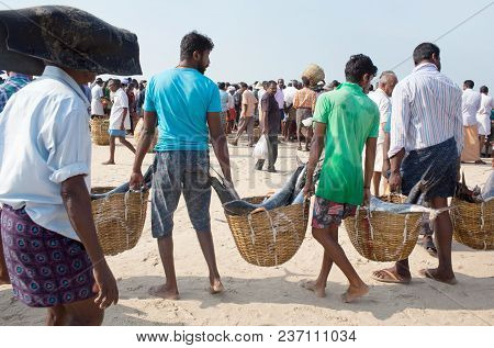 Alleppey, India - November 7, 2016: Indian Fishermen Carrying Big Fish To The Morning Market On The