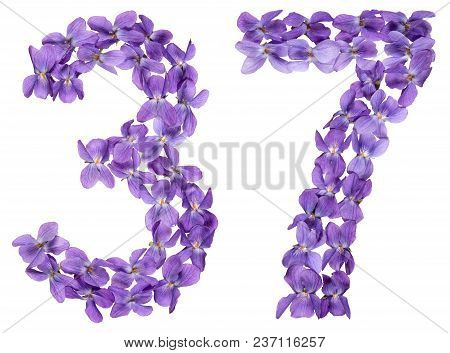 Arabic Numeral 37, Thirty Seven, From Flowers Of Viola, Isolated On White Background