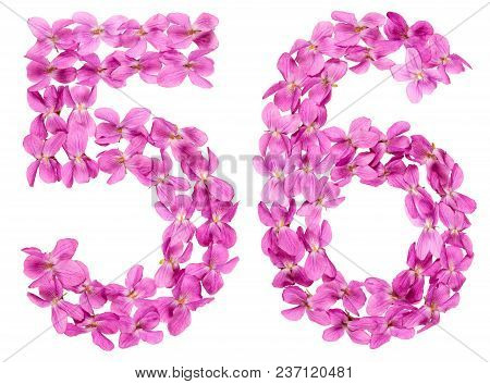 Arabic Numeral 56, Fifty Six, From Flowers Of Viola, Isolated On White Background