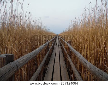 The Wooden Dock In The Lake, Natural Park In Latvia