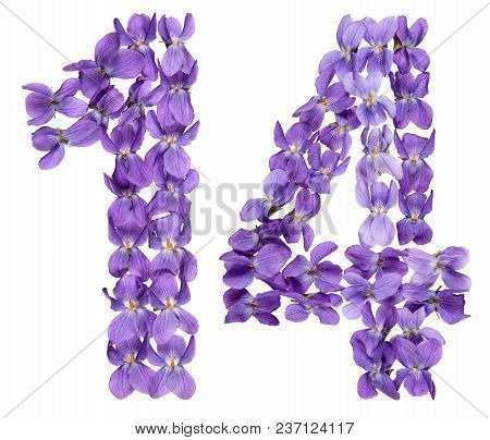Arabic Numeral 14, Fourteen, From Flowers Of Viola, Isolated On White Background