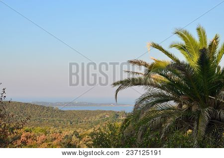 Part Of A Palm Tree Top With Shoreline And A Seascape