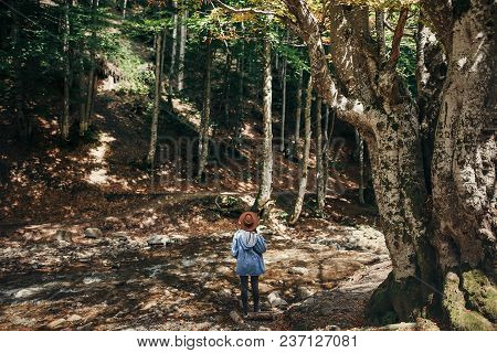 summer vacation. travel and wanderlust concept. stylish traveler girl in hat under trees looking at river in sunny forest. space for text. back view. woman traveling in mountains poster