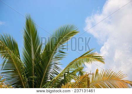 Coco Palm Tree Leaf On Sky Photo. Tropical Vacation Destination Place. Exotic Island Holiday. Tropic