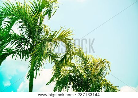 Coco Palm Tree Brght Toned Photo. Tropical Vacation Destination Place. Exotic Island Holiday. Tropic