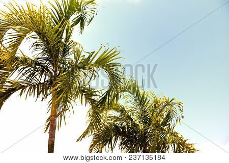 Coco Palm Tree Retro Toned Photo. Tropical Vacation Destination Place. Exotic Island Holiday. Tropic