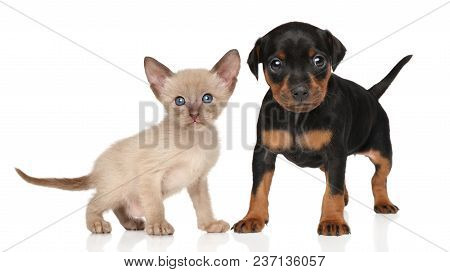 Portrait Of Kitten And Puppy On а White Background.