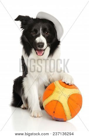 Border Collie With A Basketball Ball On A White Background