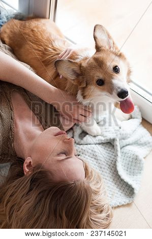 Tired Welsh Corgi Pembroke Puppy Lying On Its Owners Hands. Smiling Girl Playing With Her Welsh Corg