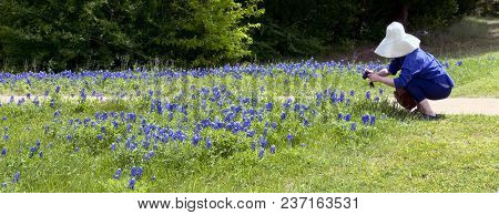 Taking Photos Of  Texas Bluebonnets In Ennis,texas.