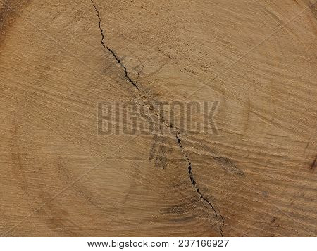 Sawn End Of Log Showing Growth Rings And Check