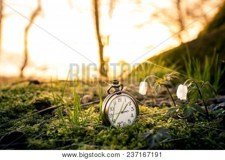 Antique Pocket Watch Buried In Moss In The Sunrise Over A Forest With Anemone Flowers In The Spring
