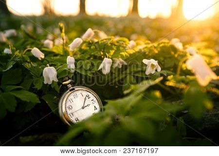 Golden Pocket Watch In A Forest With Anemone Flowers Covering The Ground On An Early Spring Day In T