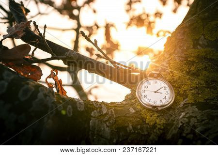 Antique Pocket Watch Hanging On A Tree In The Fall On A Beautiful Morning In The Sunrise