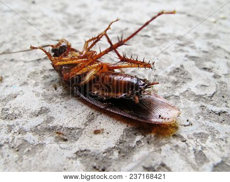 The Cockroaches Lie On The Cement Floor