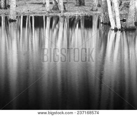 Trees In Melted Snow Landscape Background Hd