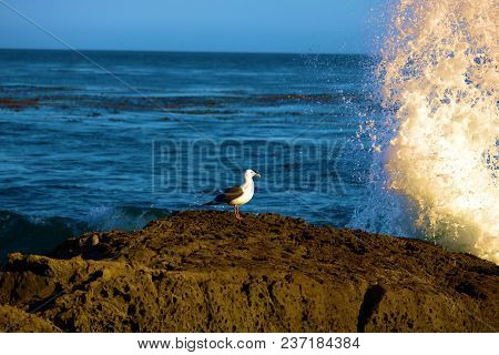 Waves Crashing Onto A Rock With A Seagull Standing On Rocky Tide Pools Taken On The Rugged Californi