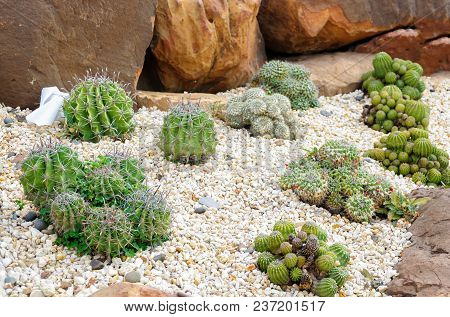 Decorative Cactus With Stone In Indoor Garden