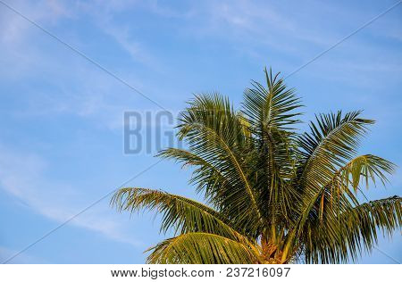 Coco Palm Tree Crown On Sky Photo. Tropical Vacation Postcard. Exotic Island Holiday. Tropical Lands