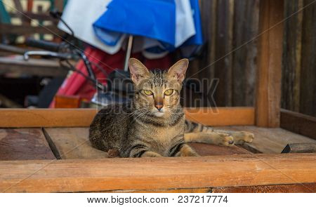 Homeless Cat Hides On Wooden Boards In Backyard. Yellow Eyes Of Stray Cat. Brown Cat On Brown Wood B