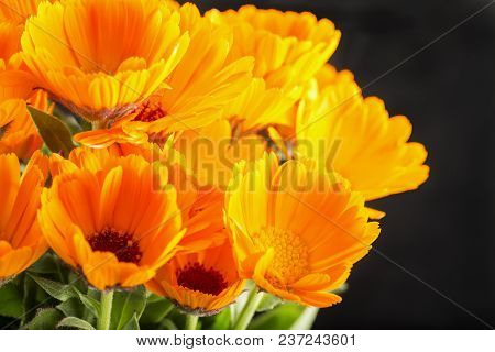 Yellow Daisies Over Black Background