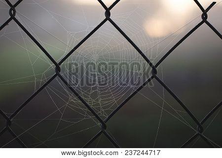 Large Web On  Metal Grid. Morning, Sunrise