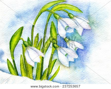 The First Spring Snowdrops Against The Background Of Snow And Cloudy Sky. Hand-painted Watercolor Il
