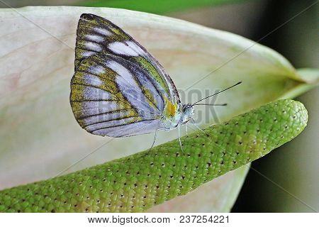 Orange Gull Butterfly Live On Green Pollen