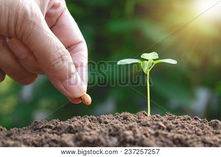 Hand Of Women Cultivation With Young Plant And Seed In The Morning Under Garden Green Background.