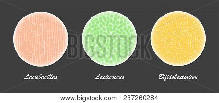 Probiotic Bacteria Cultures Under A Microscope, Field Of View With Lactobacillus, Bifidobacterium, A
