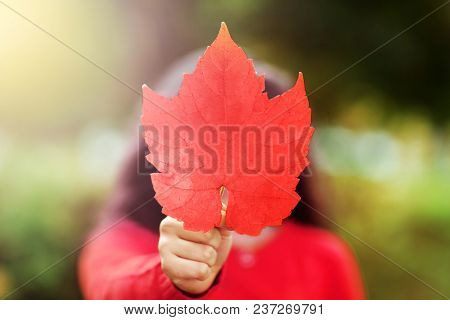 Canada Day Picture Of Red Maple Leaf In The Hand Of Girl. Young Girl With The Red Maple Leave In Sha