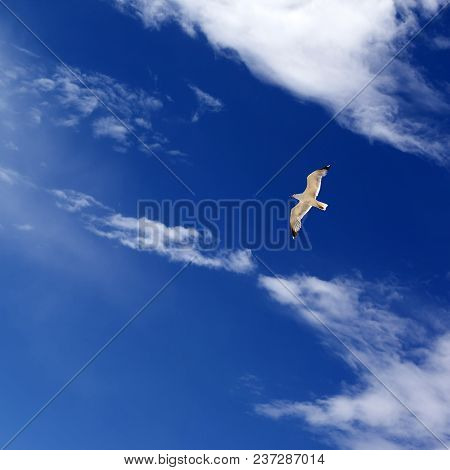 Seagull Hover In Blue Sky With Sunlight Clouds At Sunny Summer Day