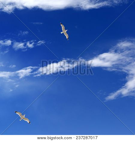 Two Seagulls Hover In Blue Sky With Sunlight Clouds At Sunny Summer Day