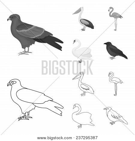Kite, Pelican, Flamingo, Swan. Birds Set Collection Icons In Outline, Monochrome Style Vector Symbol