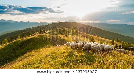 Mountain Range At Sunset. A Herd Of Sheep In The Mountains. Beautiful Mountain Landscape View. Sheph