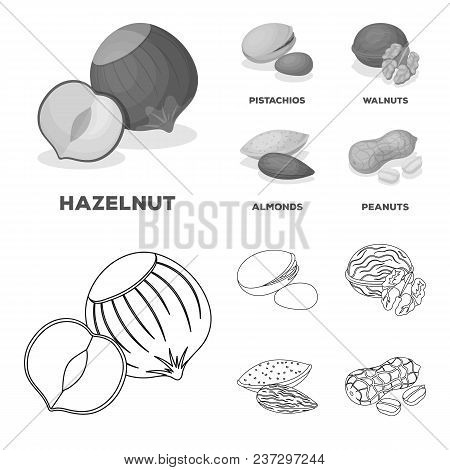 Hazelnut, Pistachios, Walnut, Almonds.different Kinds Of Nuts Set Collection Icons In Outline, Monoc