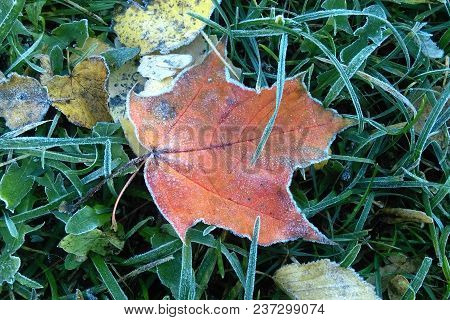 A Sheet Covered With Frost Or Radiation Frost. The Autumn Colors Are Red And Green With The Dust Of