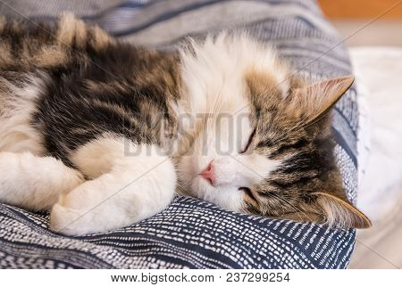 Closeup Of White Tabby Cat Sleeping In Bed