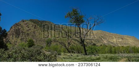 Woodland Tree In California Meadow