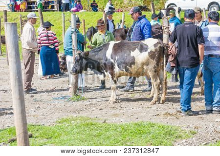 Otavalo Ecuador 2018 In This Animal Market In Otavalo A Lot Of Farm Animals Are Sold Every Saturday.
