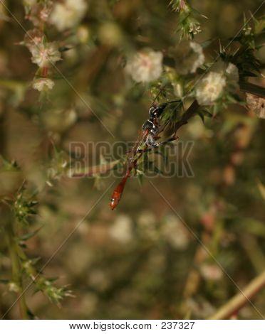 Wasp On Tumbleweed