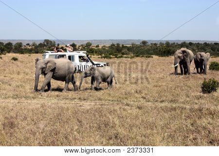 Safari Game Drive