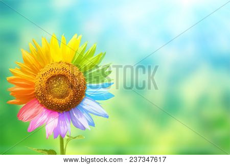 Concept - to be yourself, to be unique.  Sunflower with petals painted in rainbow colors on blurred background of green and blue colors