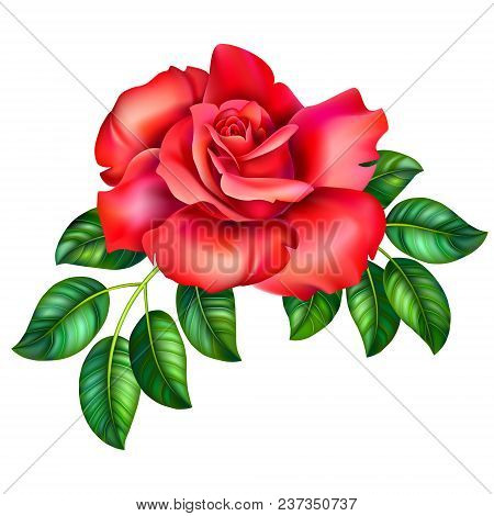 3d Illustration Of Red Rose Flower On White Background, Vector Clip Art Realistic Branch Of Beautifu