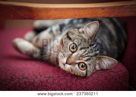 Pets, Morning, Comfort And Rest Concept - Cut Cat At Home